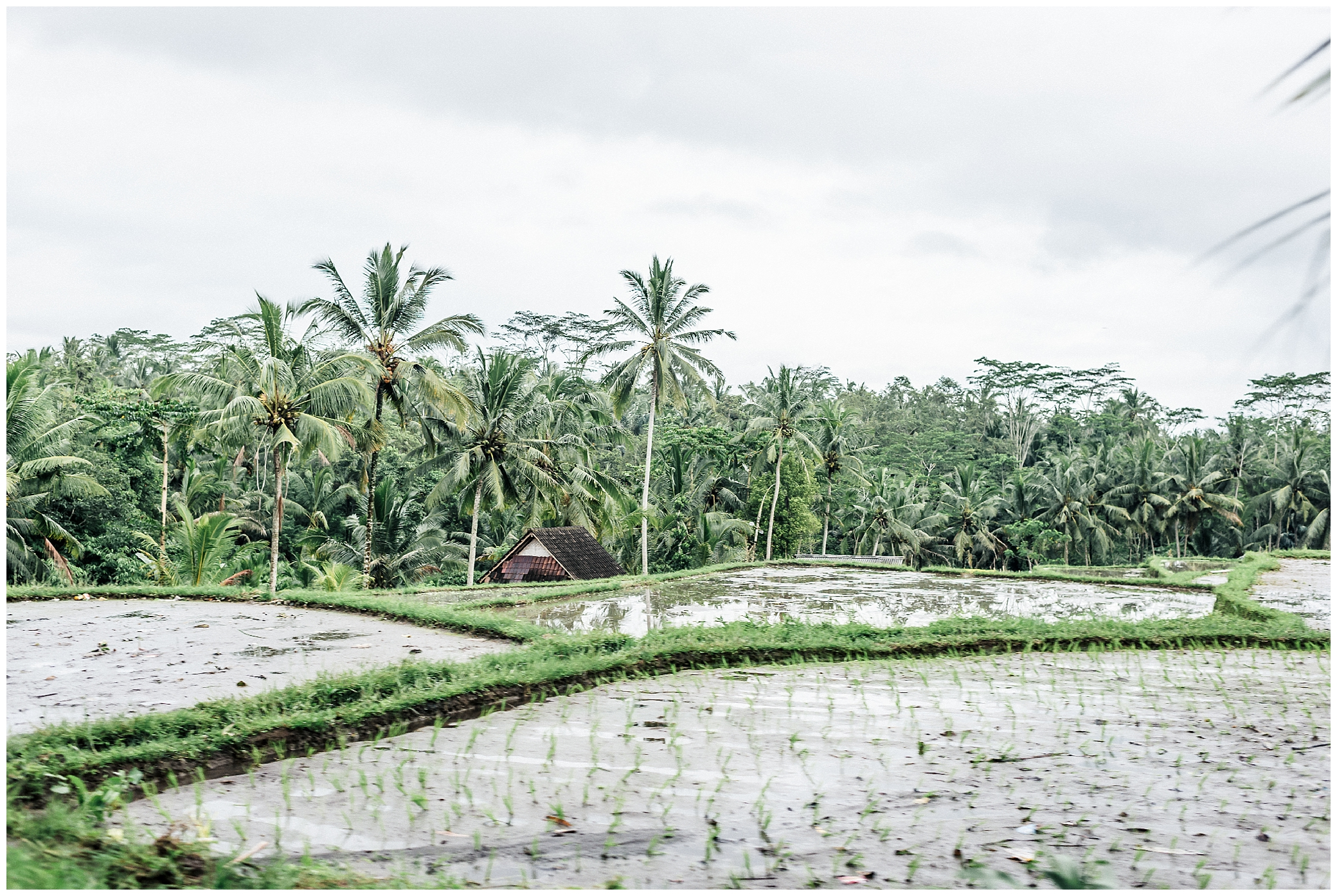 Top 10 Awesome Things To Do In Ubud_0022.jpg